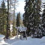 Nella Foresta dei Draghi in inverno