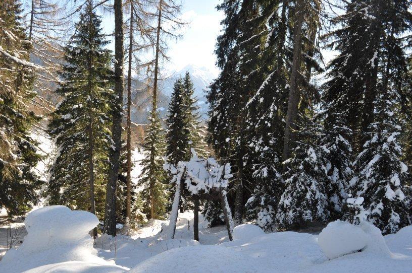foresta dei draghi - uovo di drago di marco nones in inverno