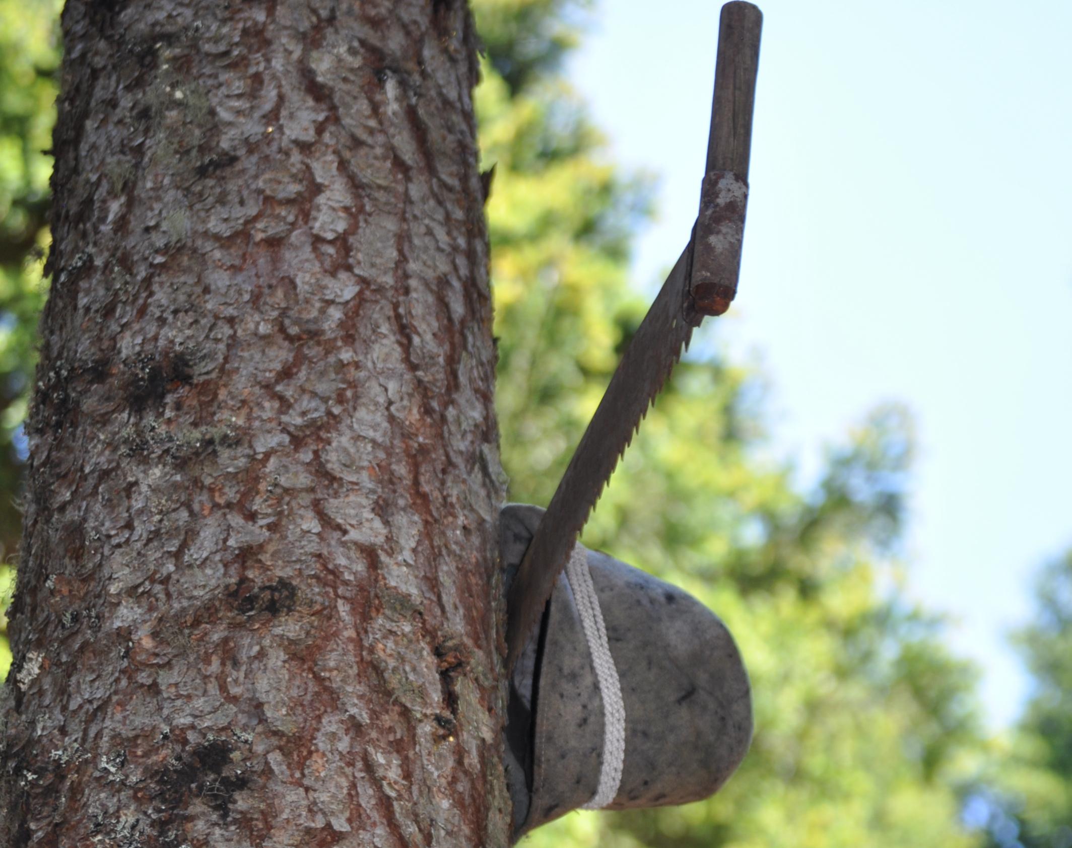 sentiero del pastore distratto - cappello e sega