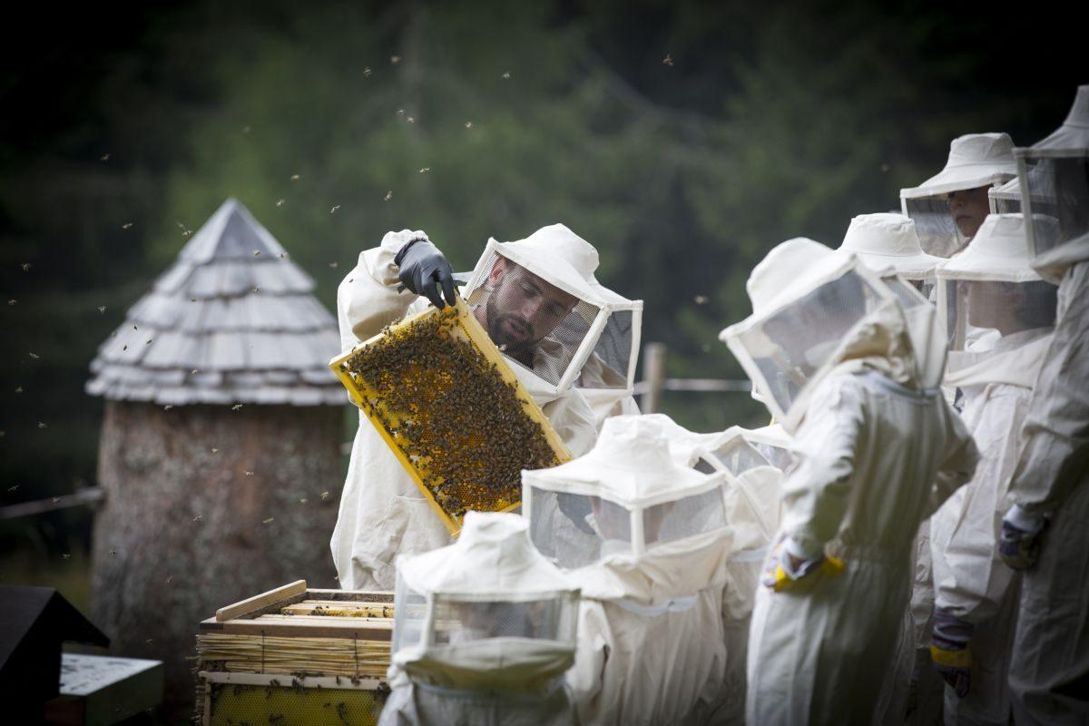 apicoltore-arnia ph. Modica