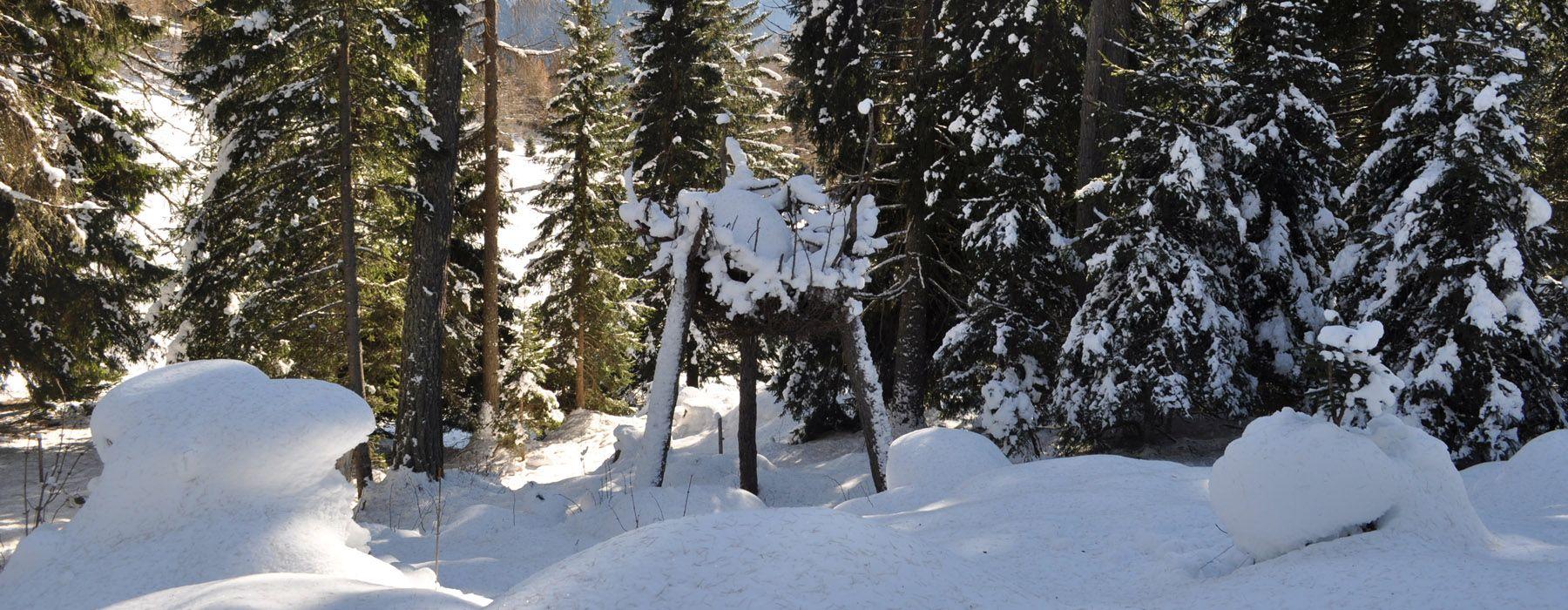 foresta-dei-draghi-in-inverno-predazzo-val-di-fiemme-trentino
