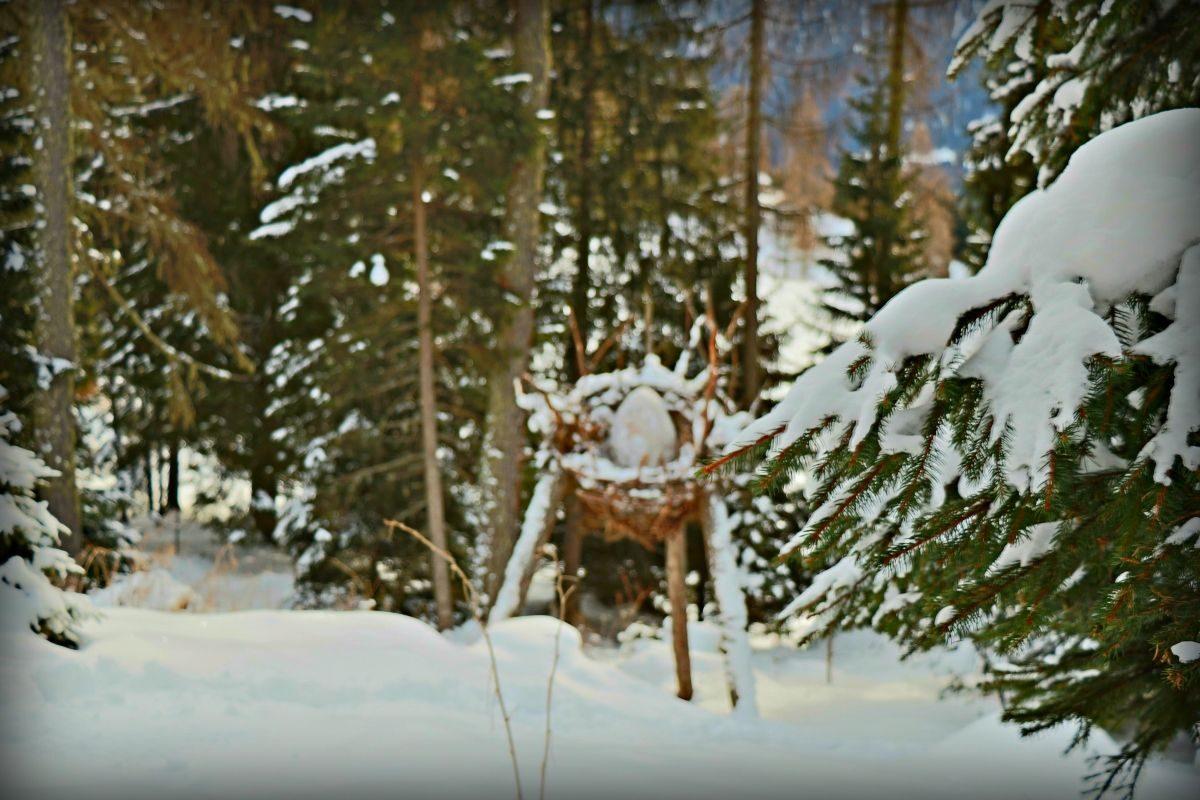 foresta dei draghi predazzo in inverno