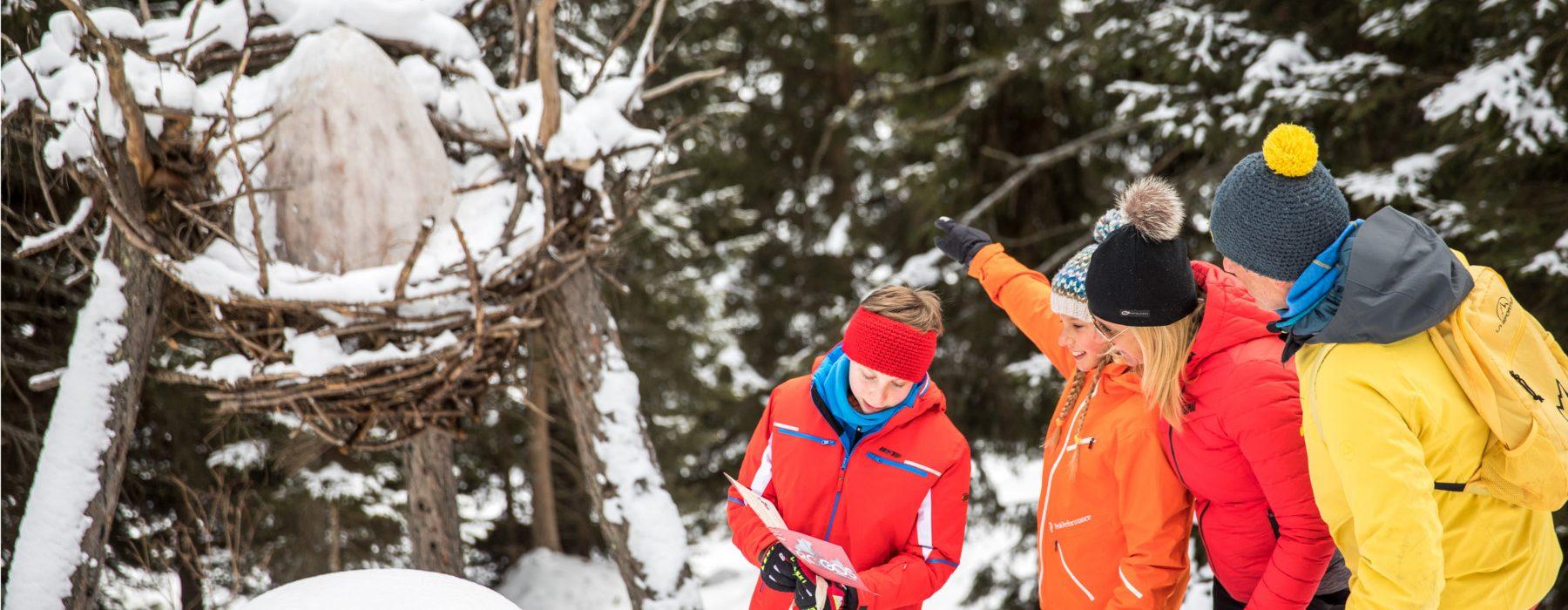 sentiero tematico la foresta-dei-draghi-inverno-predazzo-val-di-fiemme trentino